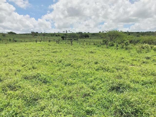 Fazenda à Venda na Bahia - Fazenda de Pecuária c/ 326 Hectares em Várzea do Poço - Bahia - Foto 15