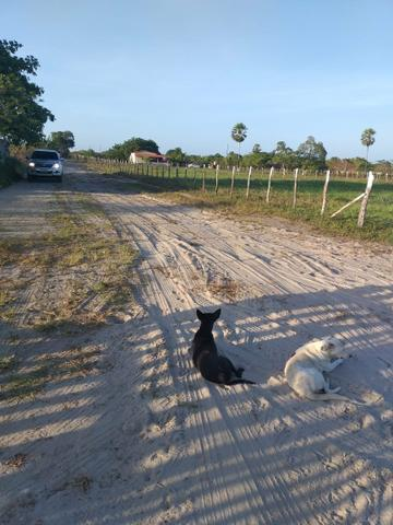 Pequeno sítio em Itaitinga! - Foto 3