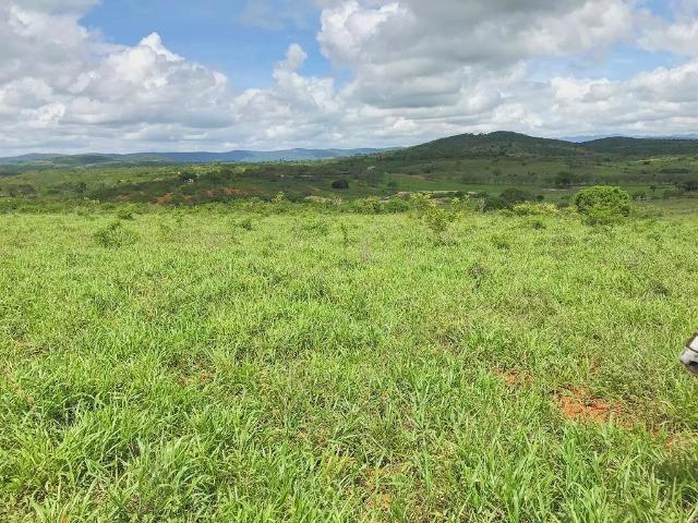 Fazenda à Venda na Bahia - Fazenda de Pecuária c/ 326 Hectares em Várzea do Poço - Bahia - Foto 9