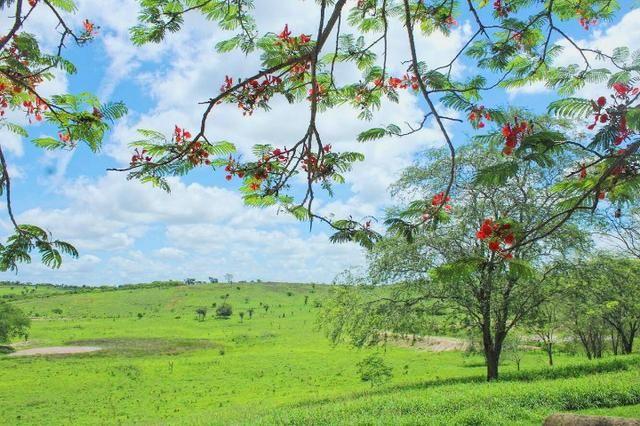 Fazenda à Venda na Bahia - Fazenda de Pecuária c/ 326 Hectares em Várzea do Poço - Bahia - Foto 18