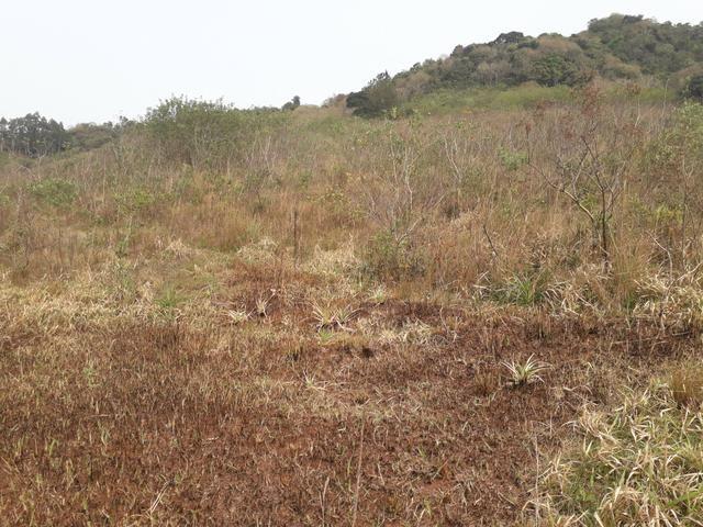 14,9 hectares de terra na beira do rio Uruguai - Foto 3