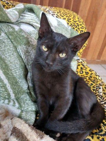 Doação de gato macho - Foto 4
