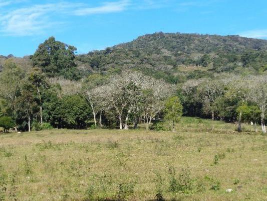 Área c/ 2 hec. Estrada Municipal de Canudos-Arroio Grande-10003 - Foto 7