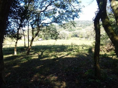 Área c/ 2 hec. Estrada Municipal de Canudos-Arroio Grande-10003 - Foto 15