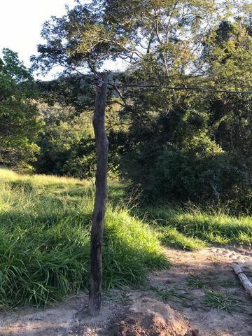 135 Alq. Pronta + Beira Rio! 40 km Pires do Rio. - Foto 11