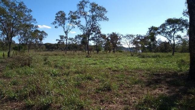 Sítio 14,6 ha e água nascente - Terenos, MS, Brasil - Foto 17