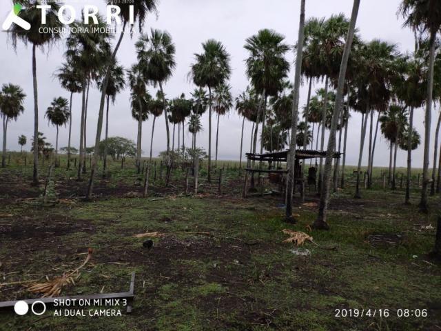 Fazenda a venda em Corumbá - Foto 12