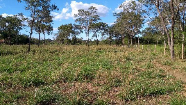 Sítio 14,6 ha e água nascente - Terenos, MS, Brasil - Foto 18