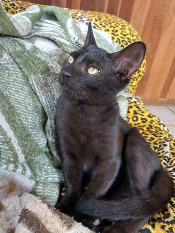 Doação de gato macho - Foto 2