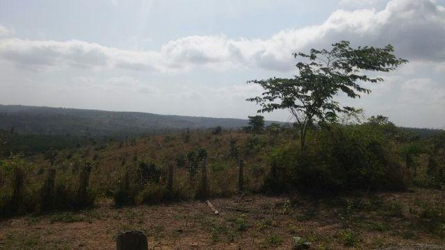 Fazenda em bom jesus das selvas-ma (99 99229-5133)