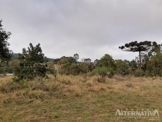 Ótimo Terreno Rural 32.000m2, Vila Volta Grande - Rio Negrinho SC. Oportunidade - Foto 3