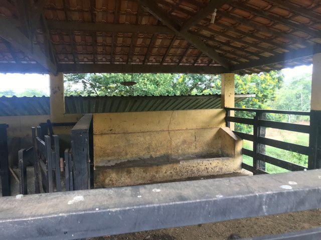 Excelente fazenda com estrutura pra corte e leite - Foto 8