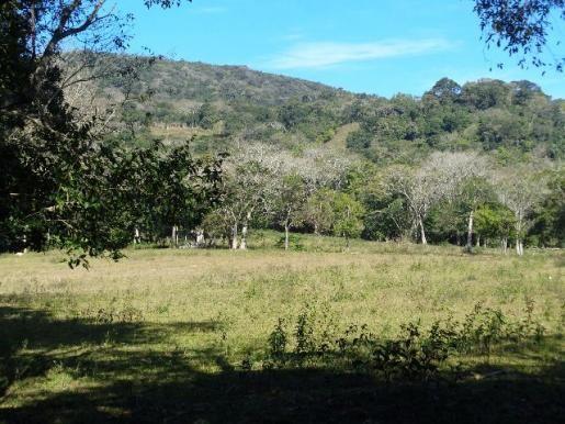 Área c/ 2 hec. Estrada Municipal de Canudos-Arroio Grande-10003 - Foto 11