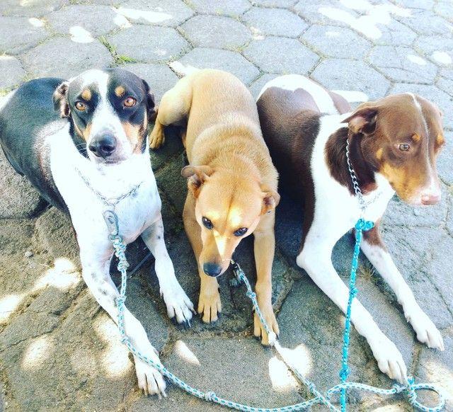 Adestrador de cães - Foto 3