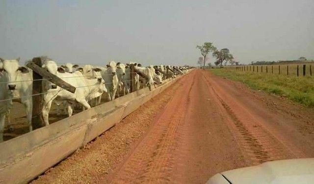 Reservatório / bebedouros e Cochos para gado - Foto 6