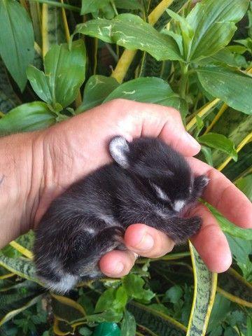 Mini coelho Black Other Disponivel