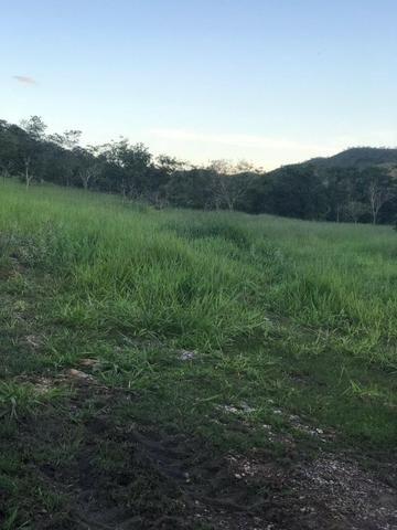 135 Alq. Pronta + Beira Rio! 40 km Pires do Rio. - Foto 14