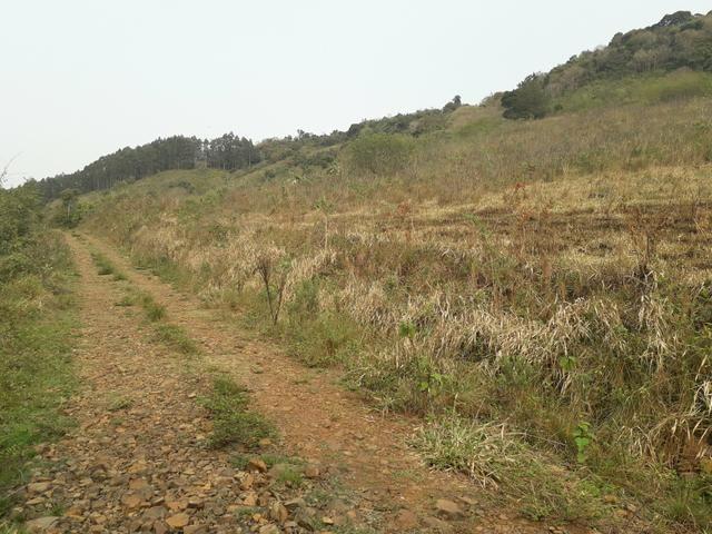 14,9 hectares de terra na beira do rio Uruguai - Foto 5