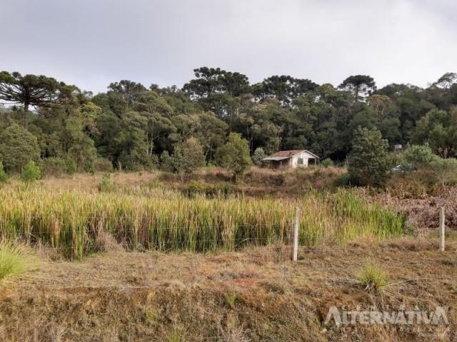 Ótimo Terreno Rural 32.000m2, Vila Volta Grande - Rio Negrinho SC. Oportunidade - Foto 12