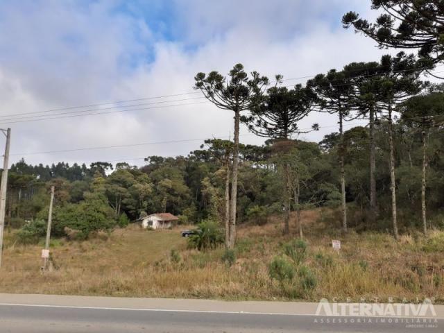 Ótimo Terreno Rural 32.000m2, Vila Volta Grande - Rio Negrinho SC. Oportunidade - Foto 8