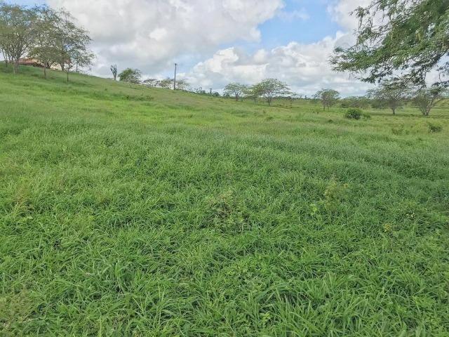 Fazenda à Venda na Bahia - Fazenda de Pecuária c/ 326 Hectares em Várzea do Poço - Bahia - Foto 13