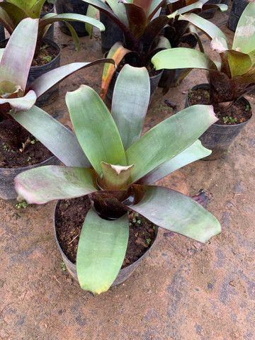 Plantas para jardim e venda no atacado de pequena médio e grande porte
