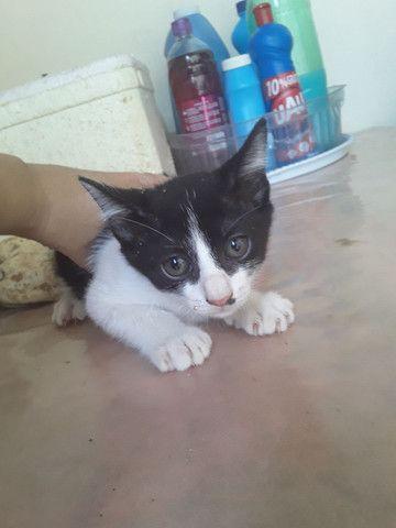 Estou doando esses gatos são lindos e muito sabidos comem tudo .. - Foto 3