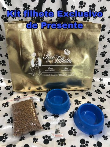 Com Um kit Especial de Presente Bulldog Frances Filhotes - Foto 6
