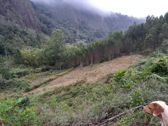 DM- Sítio/Terreno Grande em Santa Teresa 13 hectares - Foto 7