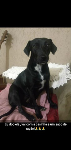 Dog caopanheira