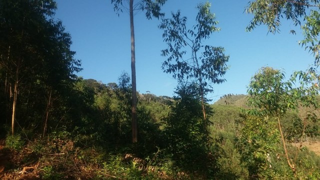 DM- Sítio/Terreno Grande em Santa Teresa 13 hectares - Foto 10