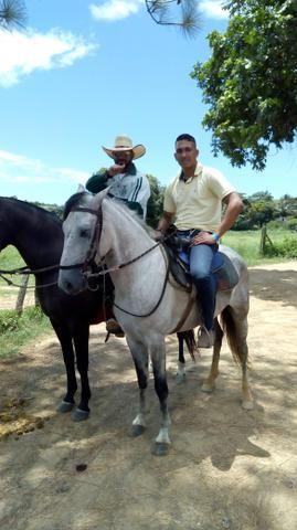 Cavalo castrado tordilho