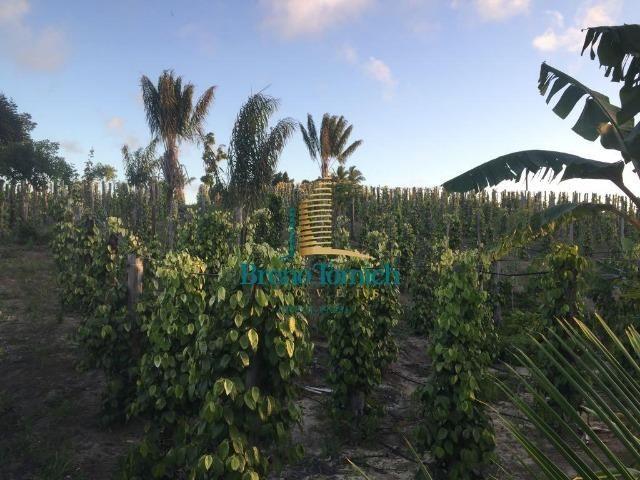 Fazenda em Belmonte-BA
