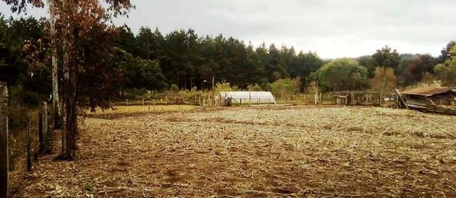 Sítio na Vila Rural (Queimadas) em Inácio Martins - Área: 5,044.09 m² - Foto 8