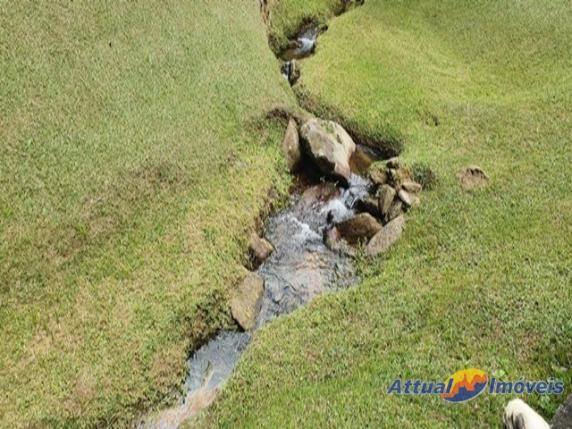 Excelente propriedade ! Sítio rico em água, 12,00 alqueires mineiros à venda em Ponte Nova - Foto 7
