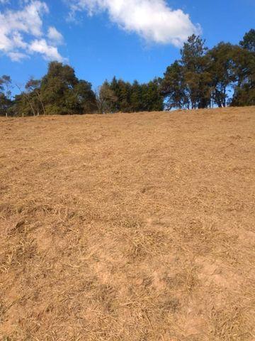 85- Compre seu terreno agora, sem complicações - Foto 4