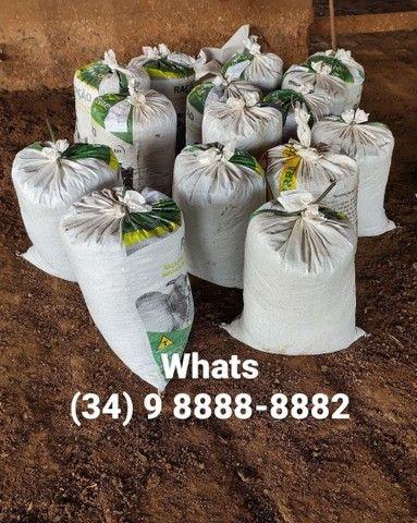 Esterco (embalado em sacos de 40kg) *Entrego - Foto 5