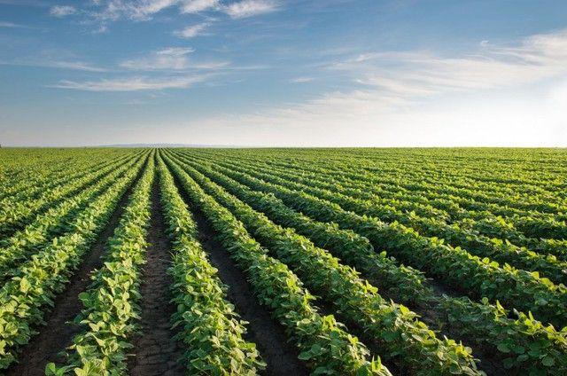 Invista no campo crédito rural para plantio, reforma de pasto em geral. - Foto 2