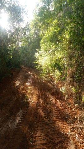 DM- Sítio/Terreno Grande em Santa Teresa 13 hectares - Foto 16