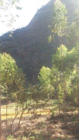 DM- Sítio/Terreno Grande em Santa Teresa 13 hectares - Foto 6