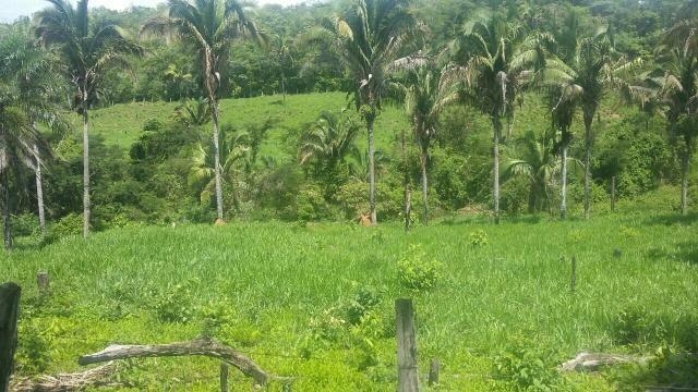 Fazenda município de rio sono