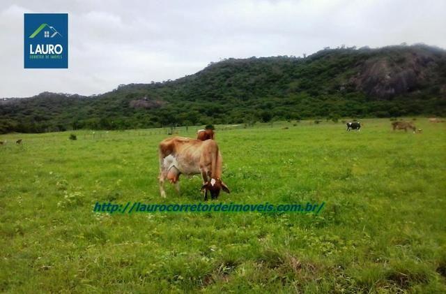 Linda fazenda com 620 Hect. em Pedra Azul-MG - Foto 3