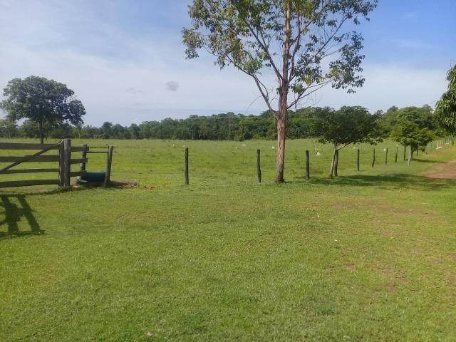 Fazenda toda formada a 99 km de Várzea Grande sentido Cáceres - Foto 7