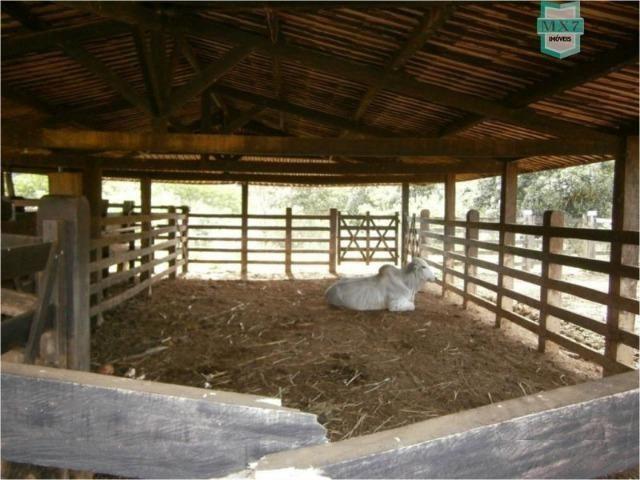 Fazenda na cidade de Ibirataia a 340 Km de Salvador e 320 Km de Camaçari - Foto 10