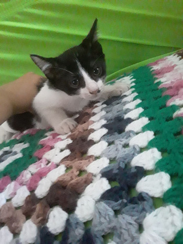 Estou doando esses gatos são lindos e muito sabidos comem tudo .. - Foto 6