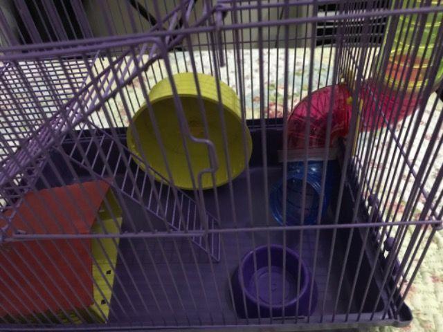 Gaiola para Hamster com labirinto - Foto 3