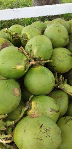 Coco Verde R$ 0,90 - Foto 2