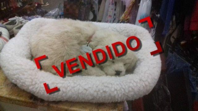 Palio lindo 11/12 - Foto 8