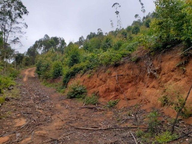 DM- Sítio/Terreno Grande em Santa Teresa 13 hectares - Foto 3