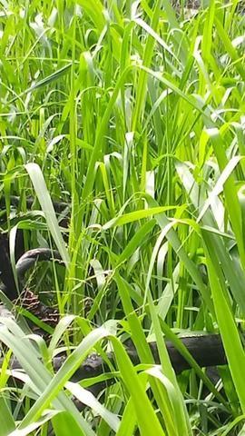 Vendo Fazenda na VilaEquador - Foto 7